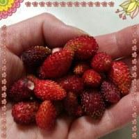 収穫~o(^o^)o