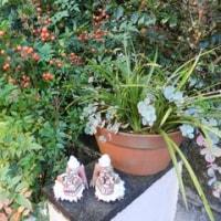 庭の草花(ミセバヤ)