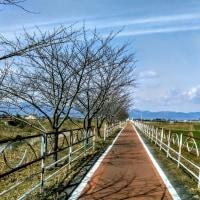 びわ湖勝手気まま歩き 21周-4回目・近江八幡~琵琶湖大橋東詰