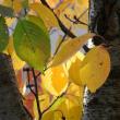 秋らしい画像を撮った・・つもり