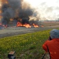 渡良瀬遊水池のヨシ焼き