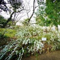 超広角レンズ10ミリで撮った春の赤塚植物園