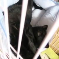 【小梅・さくら通信】人が猫の毛皮を着ている…?!