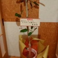 小千谷 NEW OPEN Dining Booth「一氣」
