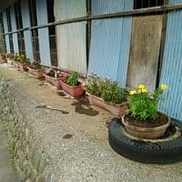 お花の植え替え