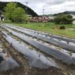 サツマイモ作り・・・作業所の畑にて