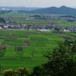 田圃の草刈