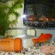 家の金魚ちゃん