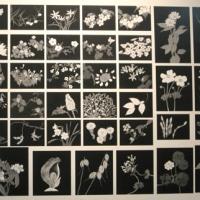 ●片山治之先生「野の花展」開催【ニュース】