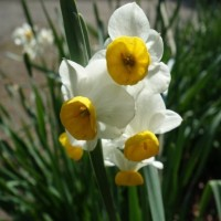 春を満喫墓参り