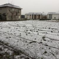 大寒です、こちらも雪景色〜