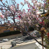 春の散歩。