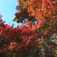 紅、朱、橙、緑、彩りの楓