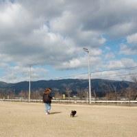 愛犬散歩(^^)