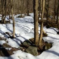 3月11日の狩猟