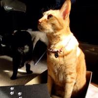 100円均一で黒猫メイ似のカップ発見!