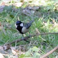 2/21探鳥記録写真(山田緑地の小鳥たち:ジョウビタキ、ミヤマホオジロ、ルリビタキ他)