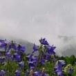 バケツをひっくり返したような 7月9日(日)曇りのち雨