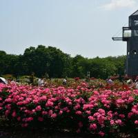 春のバラまつり・熊本農業公園 ~2017九州バラ園巡り~ その1