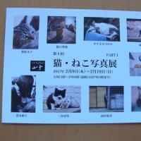 猫・ねこ写真展