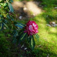 奈良の万葉植物園