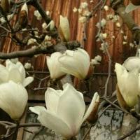 散歩道で咲く花々