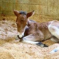 毎月18日は、古新聞の出し日、可愛いい仔馬の誕生!