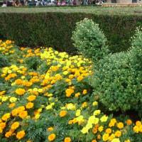 ディズニーリゾートの植物 …秋