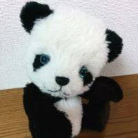 生徒さんの作品 ブルーグリーンアイのパンダ
