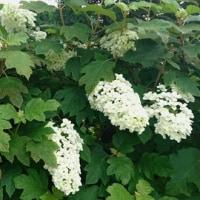 春の種蒔きが夏至を境に花咲いてきました♬
