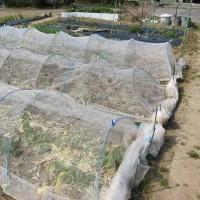 夏野菜の場所を耕運しました