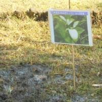 野草植え付けイベント