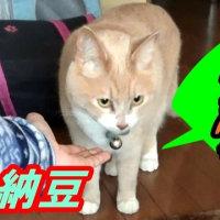 猫ズを留守番させて名古屋に行ってきた♪【猫日記こむぎ&だいず】2017.03.19