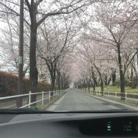 運転と運動神経         フジドライビングスクール東京