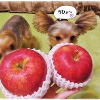 魅惑のおりんご。
