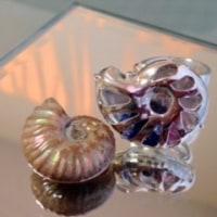 魅惑の螺旋~アンモナイトリング&ネックレス