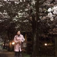 満開の桜〜思わず車を止めました🌸