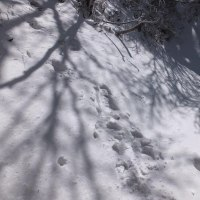 世界遺産大峯奥駆道を歩く  清浄大橋から大峰山へ向いましたが、雪と氷に痛めつけられて惨敗しました。2017年3月10日 その3