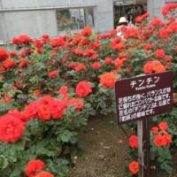 薔薇・花巻温泉バラ園編