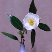 2017年3月13日 椿の花