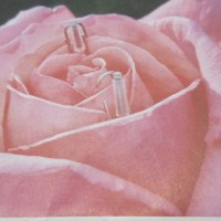 バラの花 姿と香りで 花の女王