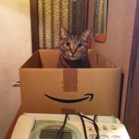 Amazonからお届けもの