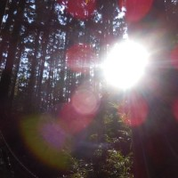 森林セラピーで心身のリセット