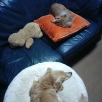【5月第3週のハイ&ロー】眞子さま、犬の誕生日