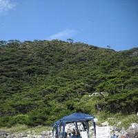 中の浦の裏山