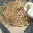 卵2個と3才のひなさん