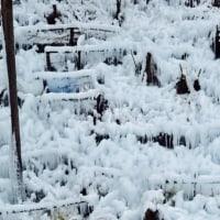 芦ヶ久保で氷柱
