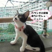 クマちゃん🐈365日目で~す(#^.^#)