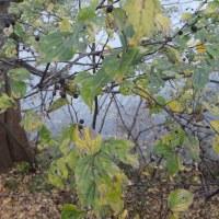 暮れる秋の川辺の風景