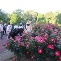 京都府立植物園のバラ園散歩